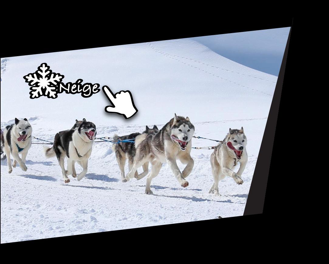 chien de traineau hiver