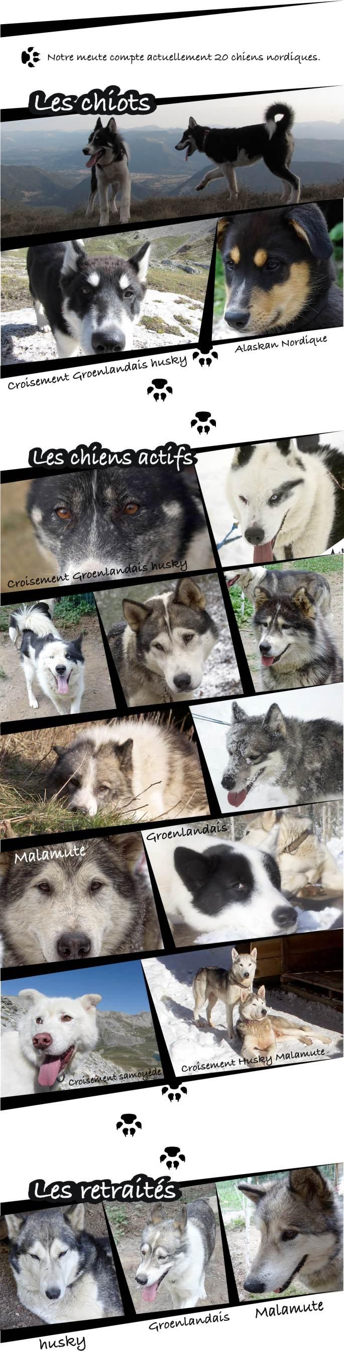page site les chiens